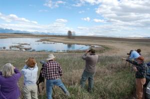5-4-2013 Wetland Birds Tour (5)