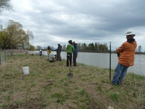 2014 5-3 Foys Bend Vol tree planting (17)